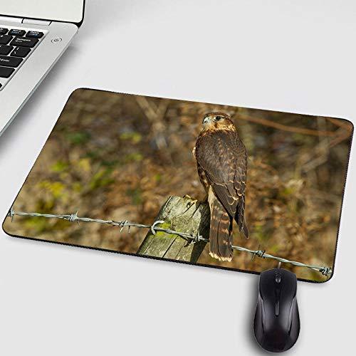 Gaming PC Mousepad Falcon Owl Tiere Haustier Katze Hund Tablet Gamer Mauspad für Dekoration Desktop und als Matte für Friend-250X200X2MM -
