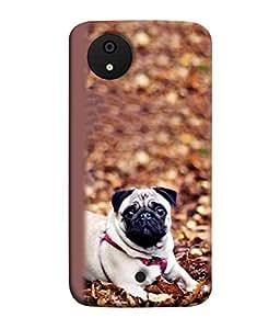 FUSON Designer Back Case Cover for Micromax Canvas Android A1 AQ4501 :: Micromax Canvas Android A1 (Animal Cat Cute Domestic Preety)