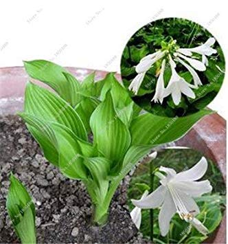 VISTARIC mixte: 100 Pcs vrai Cactus Seeds, Mini Cactus, Figuier, Succulentes japonais Graines Bonsai Fleur, Plante en pot pour jardin