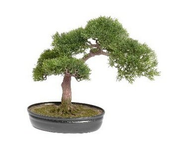 Bonsai Ceder, ca. 225 Blätter und Schale, 40cm - Kunstbonsai künstlicher Bonsai