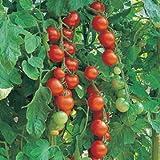 Premier Seeds Direct ORG110 - Semillas para verduras (orgánico)