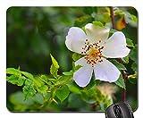 Gaming-Mauspads, Mauspad, Wild Rose Rose Pflanzenhund Rose Rosa Canina