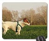 Gaming-Mauspads, Mauspad, Hund im Freien Tier Haustier Sommer Naturpark Rasse