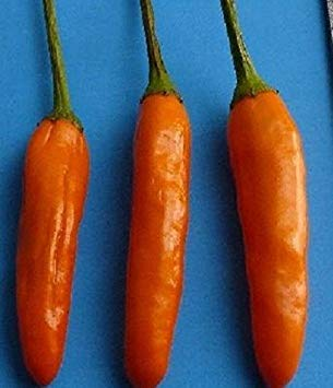 Shoppy Star: Afrikanischer Vogel ORANGE, (10 Pepper Samen) AkA Malawi Vogel Chili, Piri Piri