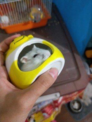 Small Animal Hideout Ceramic House Critter Bath House Cave Mini Hut Cage for Chinchilla Hamster (ORANGE) 5