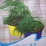 GEOPONICS 100 graines/sac de graines de graines d'asperges à l'intérieur des graines en pot graines bureau d'air frais