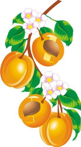 T-Shirt E131 Schönes T-Shirt mit farbigem Brustaufdruck - Logo / Comic - Aprikosenzweig mit Früchten und Blüten Schwarz