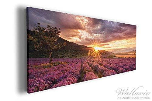 Wallario XXL Wallario Leinwandbild Lavendelfeld bei Sonnenuntergang - Sonnenstrahlen - 60 x 150 cm...