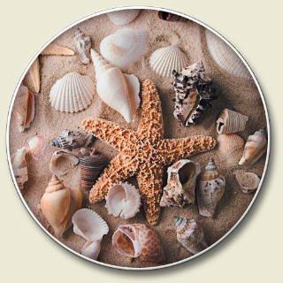 Sea Shells Auto Coaster - Single Coaster for Your Car