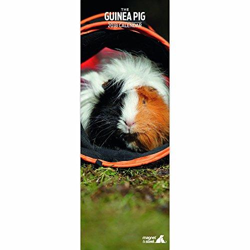 Guinea Pig 2018 Slim Calendar
