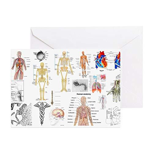CafePress Grußkarte für Menschen mit Anatomie (englischsprachig), Grußkarte, Geburtstagskarte, blanko innen, matt
