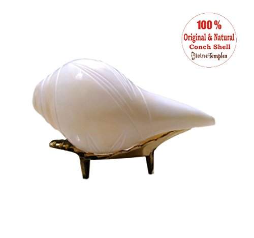 divinetemples flower blowing shank with stand - small DivineTemples Flower Blowing Shank With Stand – Small 41u85b08C3L