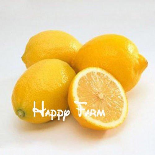 50 pièces / sac Lemon Tree Seeds Haute survie Taux de fruits Graines Pour balcon jardin Bonsai