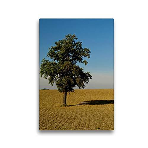 Calvendo Premium Textil-Leinwand 30 cm x 45 cm hoch, Ein Motiv aus Dem Kalender Fest verwurzelt - Faszinierende Bäume im Wandel der Jahreszeit   Wandbild, Bild Leinwand, Leinwanddruck Natur Natur