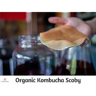 Large Organic Kombucha Scoby / Mushroom - kombucha culture, starting kit to make your own Kombucha drink