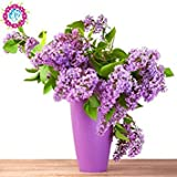 Best GENERIC Lilacs - Fash Lady 100pcs / Bag Shrub Seed Butterfly Review