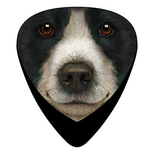 Border Collie Face Guitar Picks Celluloid Fashion Girls Complete Assorted 12 Pack -
