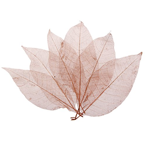50pcs Magnolia Naturali Foglio Di Scheletro Lascia Carta Scrapbook per Nozze Natale Festa - Caffè