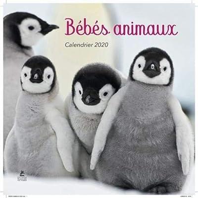 Calendrier Bébés Animaux 2020