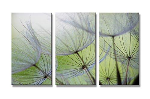 Visario 160 x 90 cm 1167 Bilder und Kunstdrucke auf Leinwand Bild Blumen Pusteblume drei Teile