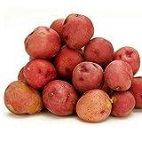Kaimus Semillas de verduras,50pcs Semillas de Patata Perennes Siembra Hortalizas Bonsai Semillas para Balcón,Patio,Hogar y Jardín