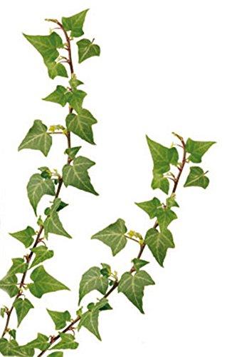 Euroart Wandsticker Blätter
