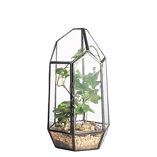 Venus Terrarium (22cm Höhe Tischplatte Unregelmäßige Glas Geometrische Sukkulente Terrarium Pflanzentopf Blumentopf Reptile mit Tür)