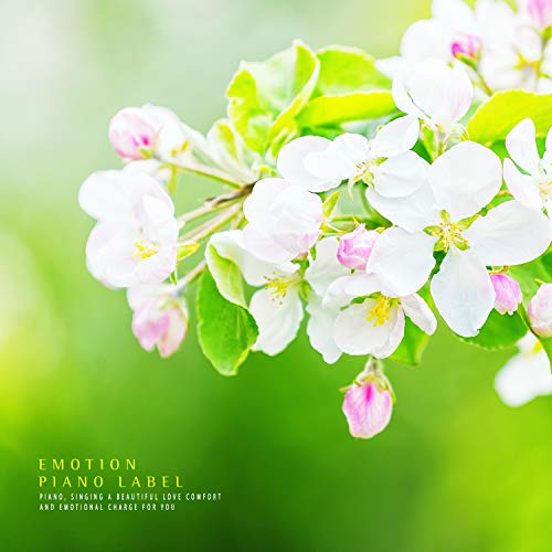 Cherry tree memories