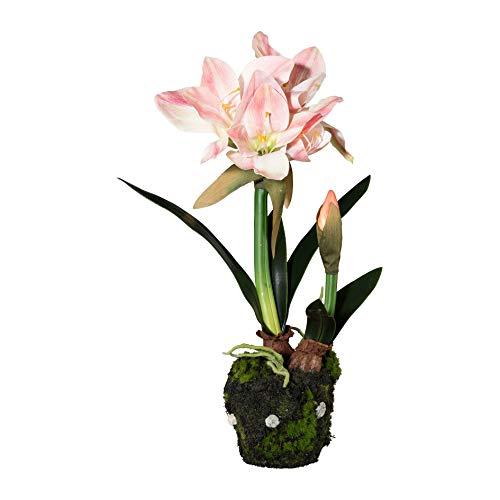Homefinity Amaryllis im Moosballen 50 cm rosa Kunstblume Dekopflanze Ritterstern