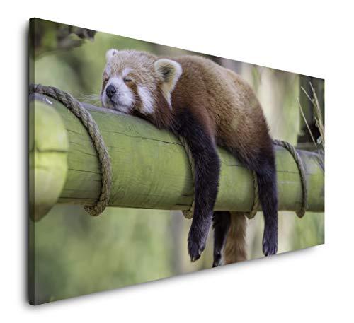Paul Sinus Art schlafender roter Panda 120x 60cm Panorama Leinwand Bild XXL Format Wandbilder Wohnzimmer Wohnung Deko Kunstdrucke -