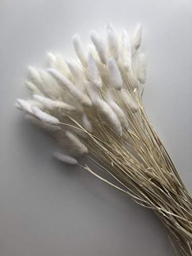MARAZ Pampasgras Lagurus natürlich getrocknet als Deko für Schlafzimmer Hochzeit Wohnzimmer Couchtisch Pampas Gras getrocknete Blumen Trockenblumen Boho Zweige Federn Eukalyptus (Weiß 60 Stück)