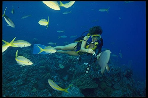 156076-scuba-diver-feeding-gray-angelfish-and-yellow-tail-snapper-a4-photo-poster-print-10x8