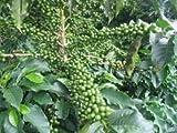 #5: coffee beans fresh Green beans powder 250g 50% off decaffeinated green beans powder