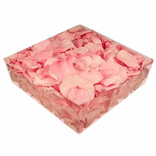 floristikvergleich.de 1l Liter Echte Rosenblätter rosa konserviert – Streukörbchen Hochzeit – Dekoration