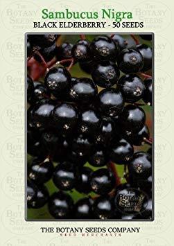 Europäische Schwarzer Holunder (50) Seeds - Sambucus Nigra - Sambucus Sirup