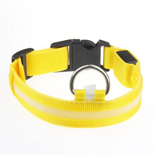 ar Sicherheit Pets Hund LED blinkendem Nachtlicht Nylon Halsband USB Ladekabel (Dallas Cowboy Halloween-kostüm)