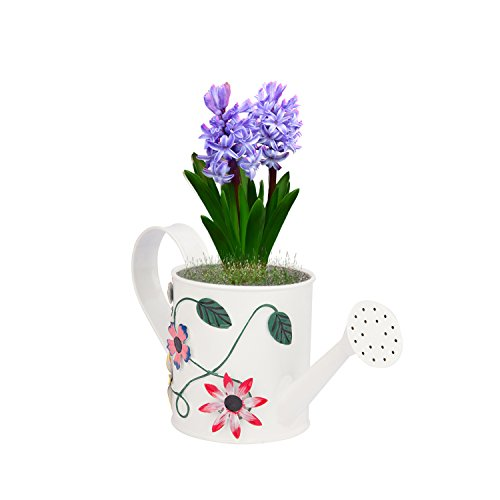 Nuha 1 liter Metal Hand Painted Watering Can , gift, gifting