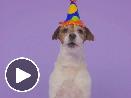 Woofy Birthday (Animated) - Amazon.co.uk eGift Voucher
