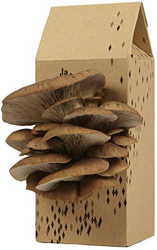 Kit Champignons - Prêt à Cultiver - Pleurotes Gris - Small (Gris...