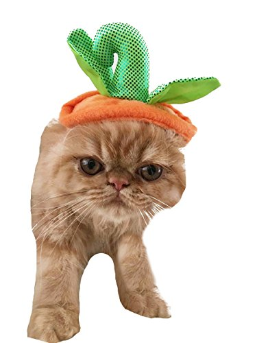 (Liebenswürdig, Halloween Thanksgiving orange & grün Kürbis Kopf Katze Hunde Hat)