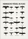 Poster 30 x 40 cm: Heimische Vögel im Fluge von Iris Luckhaus - hochwertiger Kunstdruck, Kunstposter
