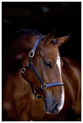 Kerbl Halfter Pferdehalfter Leder, London Schwarz, 2, 323570
