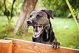 druck-shop24 Wunschmotiv: Hund gähnt, Calming Signals #121775036 - Bild auf Forex-Platte - 3:2-60 x 40 cm/40 x 60 cm