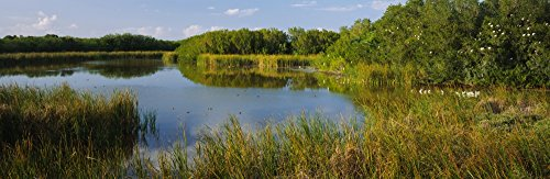 The Poster Corp Panoramic Images - Pond in a Forest Eco Pond Flamingo Campground Everglades National Park Florida USA Photo Print (68,58 x 22,86 cm) -
