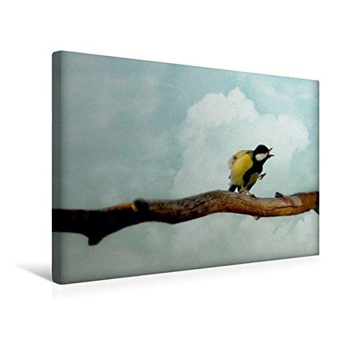 Premium Textil-Leinwand 45 cm x 30 cm quer, Schimpfende Kohlmeise | Wandbild, Bild auf Keilrahmen, Fertigbild auf echter Leinwand, Leinwanddruck: Humorvolle Vogelwelt (CALVENDO Tiere)
