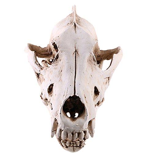 Schakal Schädel Harz Lehr Skelett Modell Figur für Sammlung Aquarium Dekor (Halloween Schädel Zu Ziehen)