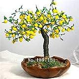 Großer Verkauf Bonsai Lemon Tree Seeds hohe Überlebensrate Obstbaum-Samen Für Privatanwender Gatden Hinterhof (50Pieces)
