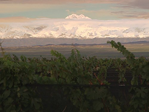 Gift of the Andes: Mendoza, Argentina and Its Wines -