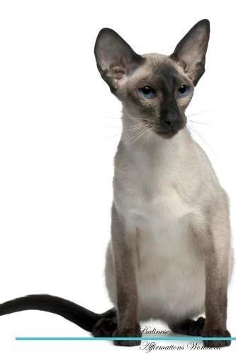 Balinese Cat Affirmations Workbook Balinese Cat Presents: Positive and Loving Affirmations Workbook. Includes: Mentoring Questions, Guidance, Supporting You.