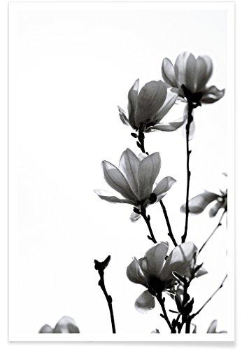 JUNIQE® Poster 40x60cm Schwarz & Weiß Blumen - Design